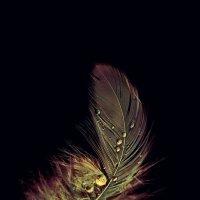 beauty of feather :: Татьяна