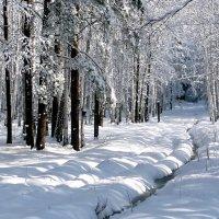 Зимний лес, начало весны :: Борис Соловьев