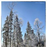 Зима. Январь. Зеленоград :: DimCo ©