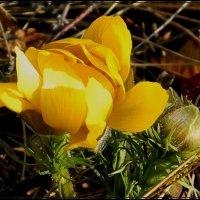 весна.пробуждение :: victor leinonen