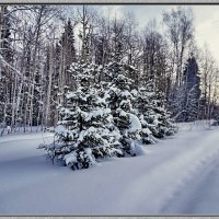 Пушистая зима :: Любовь Чунарёва