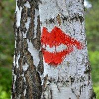 Берёзкин поцелуй :: Дмитрий Конев