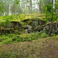 И на камнях растут деревья :: Александр Кореньков