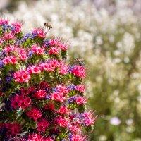 Пчелки :: Илья Ткачев