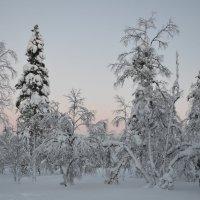 Волшебный зимний лес :: Ольга Оглоблина