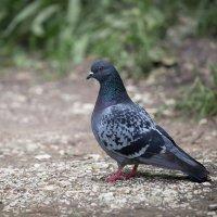 Птица мира ... :: Vadim77755 Коркин