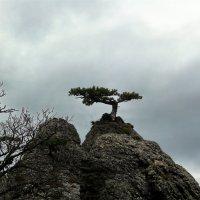 И на камнях растут деревья... :: Ольга Голубева