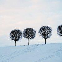 смотреть на деревья :: TN .