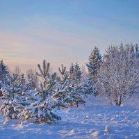 морозно :: Светлана
