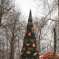 """Смоленск. Рождественская ёлка в парке """"Блонье"""" :: Алексей Шаповалов Стерх"""