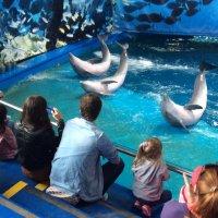 Дельфин-шоу :: Savayr