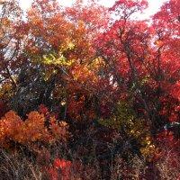 Осенние краски :: Natali