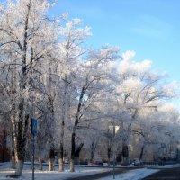 Морозное зимнее утро :: Елена Семигина