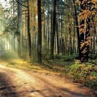 Осенней солнечной пыльцой... :: Лесо-Вед (Баранов)