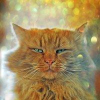 Магия кошачьего гипноза :: Александр Бойко
