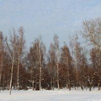 Зима 2015 :: Александра Воскресенская