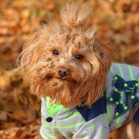 Так выглядит счастливая собака :: Екатерина Лещенко