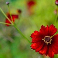 цветочек... :: Андрей Вестмит