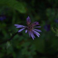 От бутона к цветку 2 :: Vera Hloponina