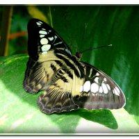 Бабочка :: Наталья (Nata-Cygan) Цыганова