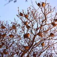 Зимние  яблоки... :: Валерия  Полещикова