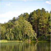 Сосны отраженные в воде :: Дмитрий Конев