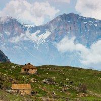 Жители Кавказа :: Артём Федин