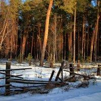 Ушедших дней последняя зима... :: Лесо-Вед (Баранов)