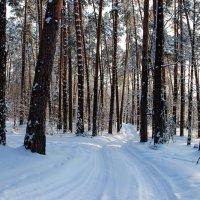 Удивляется дорога тишине... :: Лесо-Вед (Баранов)