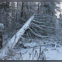 зима :: andru