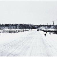 ...зима в Подмосковье :: Александр Липецкий