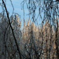 Ласковое солнышко :: Nikolay Monahov