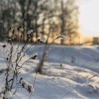 На закате :: Екатерина Рачинская