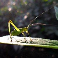 Усатый и зеленый! :: Наталья
