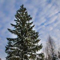 В зимнем лесу :: Елена Решетникова