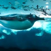 Пингвин :: Сергей Щербаков