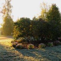 Мороз и солнце :: Николай Дони