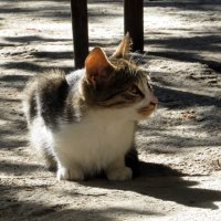 Кот как символ :: Наталья Джикидзе (Берёзина)