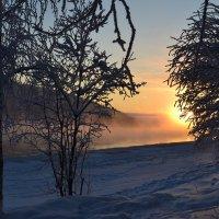 В зимнем тумане :: Ольга