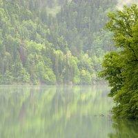 Озеро Рица. Абхазия :: Алексей Окунеев
