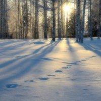 Зимнее утро :: Дмитрий Сажин