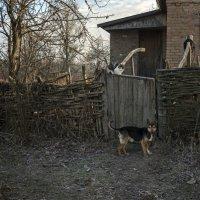 Жили-были кот и пес :: Лидия Цапко