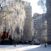 Березы в серебрянном наряде :: Елена Семигина
