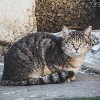 Соседский кот :: Маргарита Б.