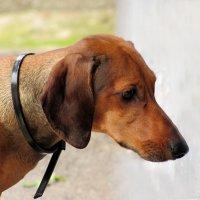 Собака как символ года :: Наталья Джикидзе (Берёзина)
