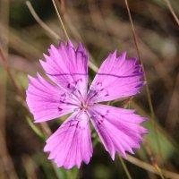 Неизвестный цветок :: Damir Si