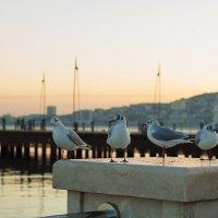 Чайки на Бакинском бульваре :) :: Мария Альбинина