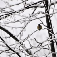 Холодно :: Нина Алексеева