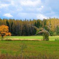 Осенний дуб :: Андрей Куприянов
