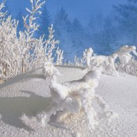 Снежные зверушки :: Влад